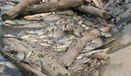 Another mass fish death in lakes near Ha Long Bay