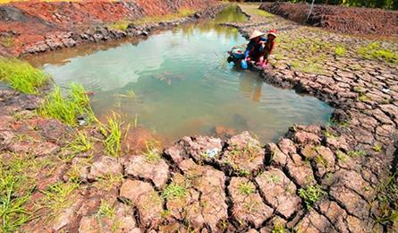 Mekong Delta farmers struggling with aftermath of drought, salinity