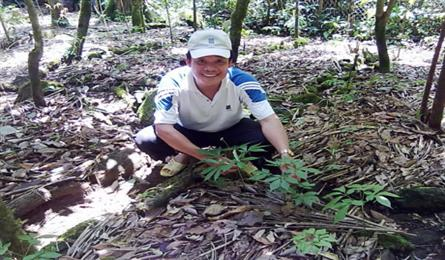 Vietnam promotes Ngoc Linh ginseng as a national brand