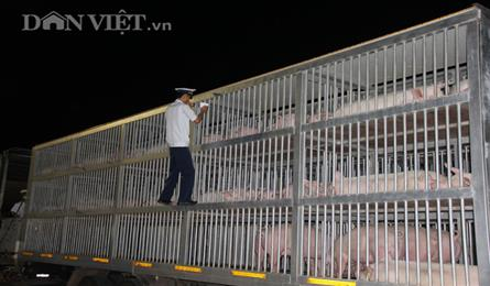 Large number of pigs imported into Vietnam from Thailand
