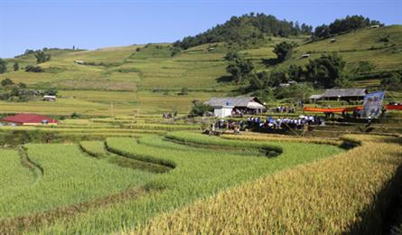 Farming competition at Mu Cang Chai terraced field