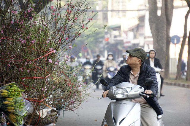Hanoi streets coloured with peach flowers