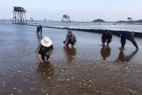Thanh Hoa clams killed by pollution
