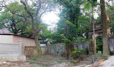 Sua tree to be felled to stop theft