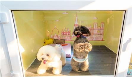 Pet hotels work through Tet