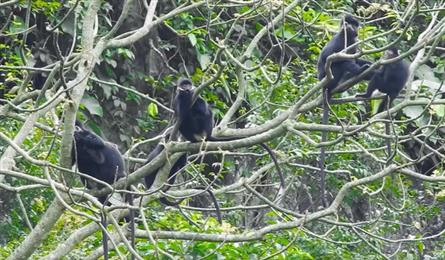 Quang Binh to launch more protection of langurs