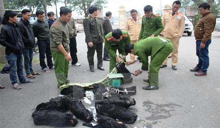 Hà Tĩnh police find bus carrying 12 dead langurs