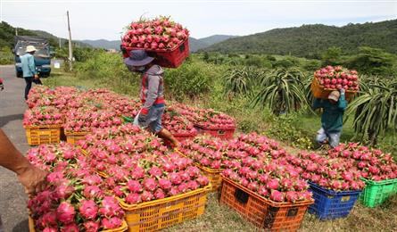 Vietnam sees rising vegetables and fruit exports to Thailand