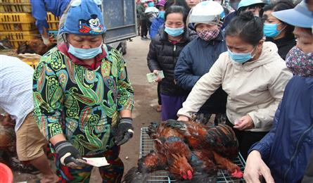 Hanoians line up to help buy chickens from Hai Duong
