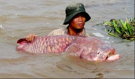 Rare species of fish bred artificially