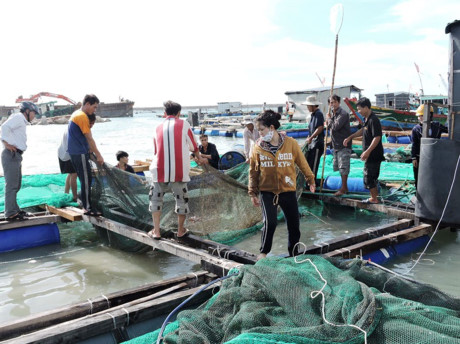 Islanders abandon lobster farming