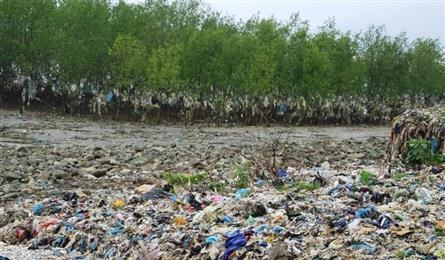 Thanh Hoa coastal forest swamped by rubbish