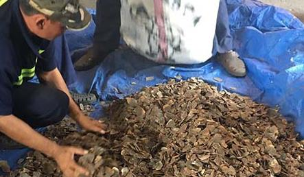 Police seize over three tonnes of smuggled pangolin scales