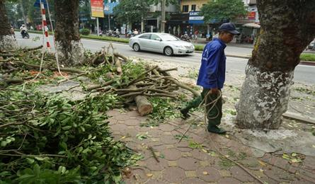 Hanoi large trees left to die as construction stagnates