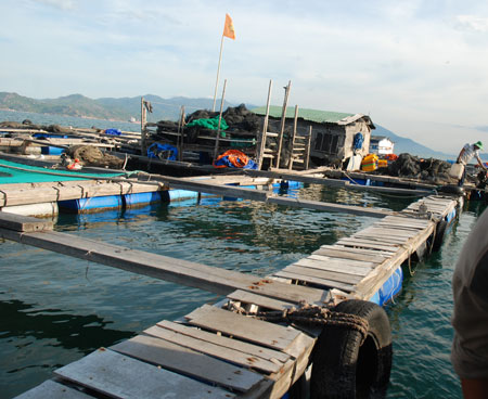 Lax management leads to illegal fish farms in Cam Ranh Bay DTiNews