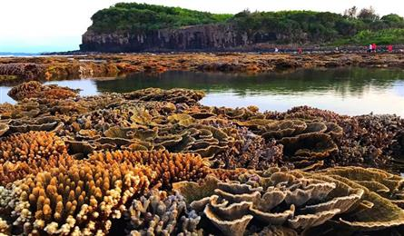 Quang Ngai nearshore coral reef amazes visitors