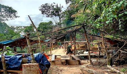 Thua Thien-Hue protective forest destroyed by illegal miners