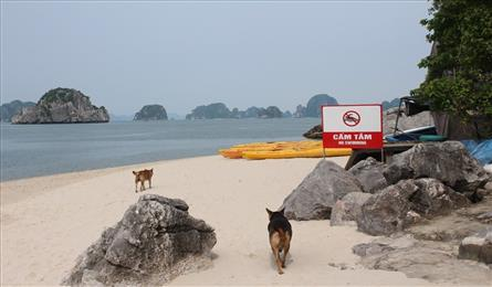 Ha Long tour agencies search for solutions to open small beaches