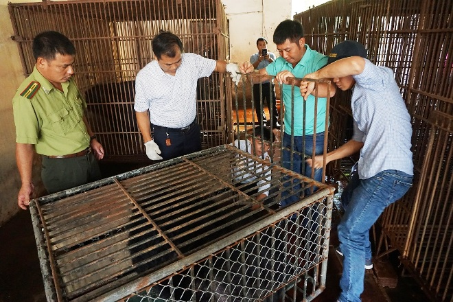Caged bear rescued in Hanoi