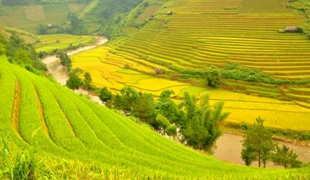 Breathtaking terraced rice fields of Mu Cang Chai