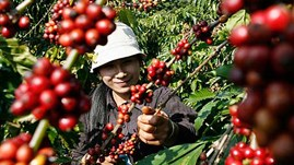 Coffee exports reach 1.56 million tonnes in 11 months