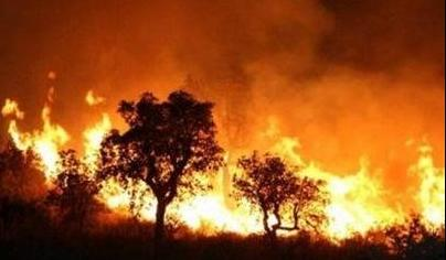 Vietnam to fight forest fires manually over next ten years