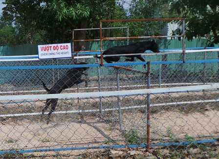 Exciting dog racing in Phu Quoc – Festivals – Travel