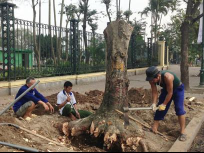 Hanoi's chairman urged to further explain controversial tree fell project