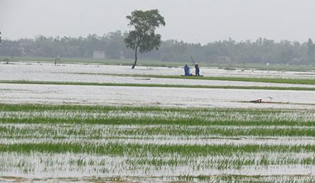 Hydropower plant blamed for flooding crops