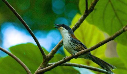 Rare bird spotted in Central Highlands