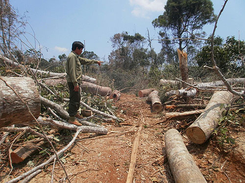 Central region: green forests shout for help as they are devastated