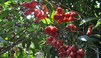 'Southern Fruit Festival 2012' to be held in June