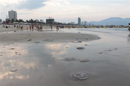 Jellyfish die-off hits Danang beaches