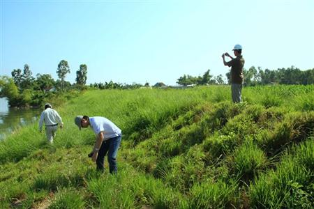 International conference on Vetiver grass opens in Danang