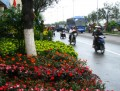 Danang's full of flowers for Tet