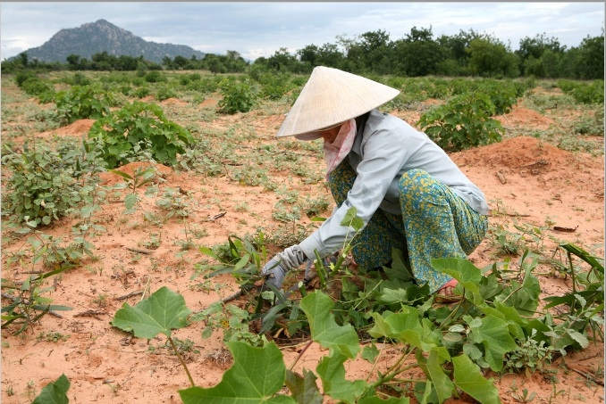 Vietnam: Government leads region in climate change challenge