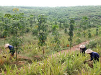 Vietnam forest land fund running out as demand soars