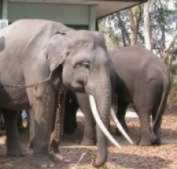 Vietnam to create elephant hospital