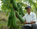 Farmer grows famous for giant crops