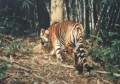 Vietnam joins in efforts to conserve tigers