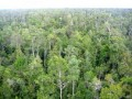 Vietnam to restrict lease of forest land to foreign investors