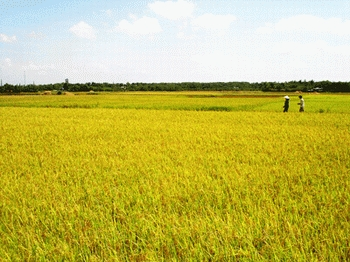 Vietnam pilots agricultural insurance in 21 localities