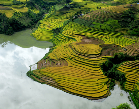 Terraced fields of rice in Lao Cai
