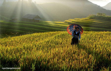 Terraced fields in Lao Cai