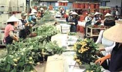 Flower sector struggles to boost exports